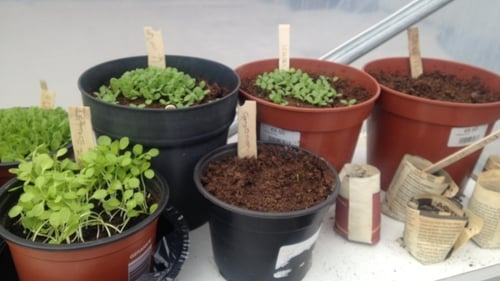 A group called Grow It Yourself are distributing seeds, pots, soils and lesson plans to schools