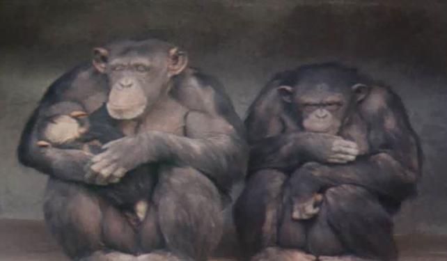 Monkeys at Dublin Zoo