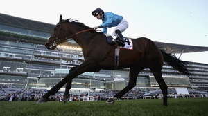 Brown Panther was a general 7-1 shot for the Gold Cup
