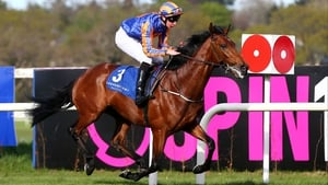 Hans Holbein is a half-brother to 2010 Irish St Leger winner Sans Frontieres
