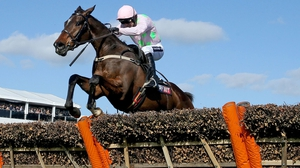 The pink and green silks of the Riccis have been carried to victory in the Moscow Flyer Novice Hurdle by Vautour and Douvan (pictured) in the last two seasons