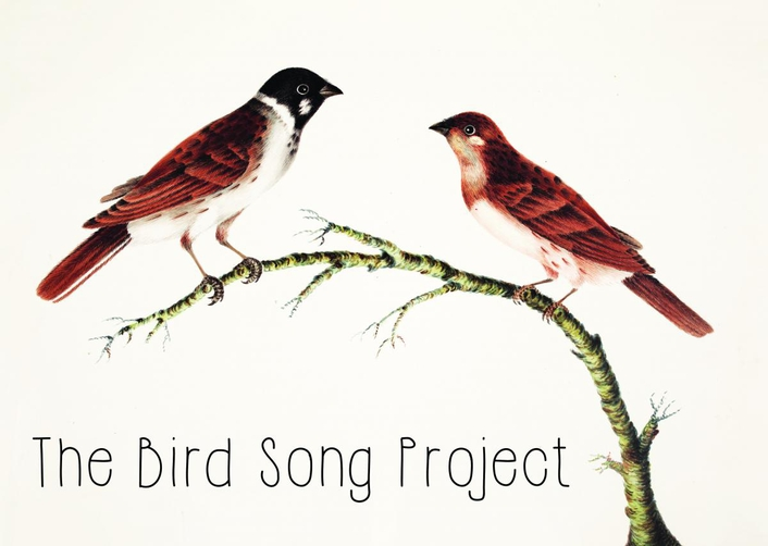 The Bird Song Project, Bealtaine