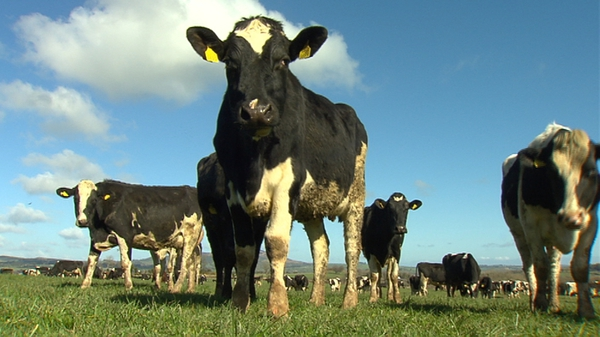 Ireland lost its negligible risk standing in 2014 after a case of BSE was discovered ina cow in Tipperary (File pic)