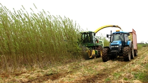The plant will take willow and miscanthus, which are fuel crops that can be grown by local farmers in the region