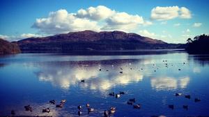 Ducks swimming in Hazelwood, Co Sligo (Pic: K Flynn)