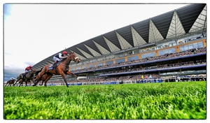 Forgotten Rules winning at Ascot in October last year
