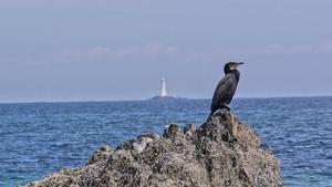 A comorant at Tuskar Rock Lighthouse, Co Wexford (Pic: Matthew Boyce)