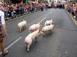 Arklow Pig Race row
