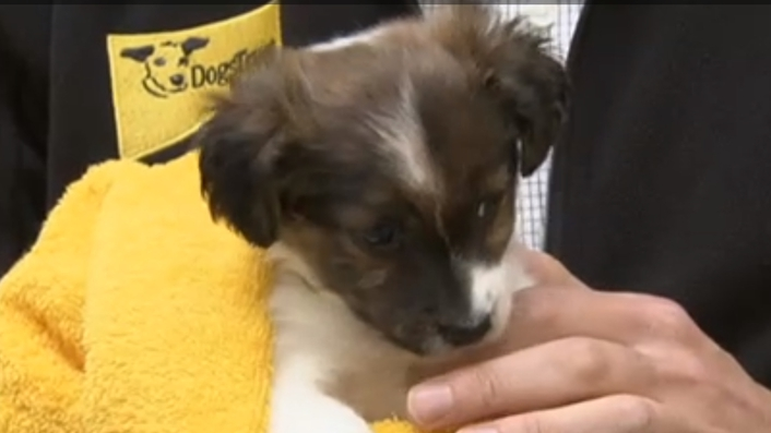 Hundreds of 'designer puppies' seized at ports last year