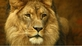 Celebrities vent anger over Cecil the lion killing