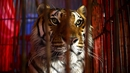 Wild animal circuses cannot take place on land owned by Dublin City Council