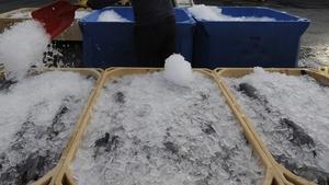 Fishermen concerned ports could close if ice in short supply