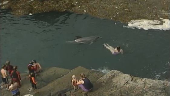 Dolphin In Doolin, 2000