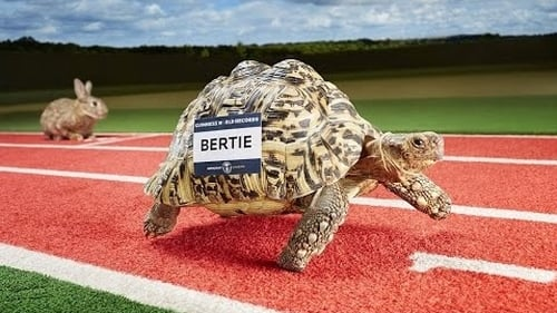 Bertie, a South African leopard tortoise, has raced his way into the records book