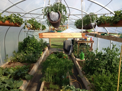 The Polytunnel in Bloom