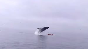 The incident was filmed by a passenger on a whalewatching trip