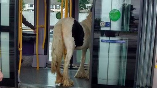 The horse was taken off the Luas before it departed (Pic: JOE.ie)