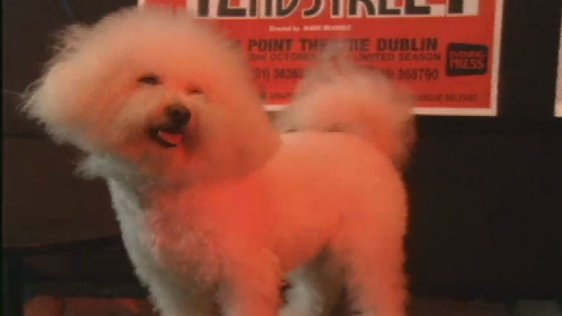 Dog Audition For '42nd Street' 1990