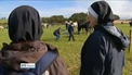 Record 281,000 people attend Ploughing Championships