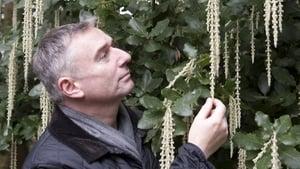 Dermot O'Neill inspects an impressive Garreya Elipicta