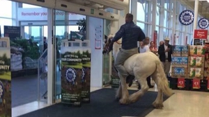 Onlookers said the horse got no further than a couple of yards inside the door of Tesco