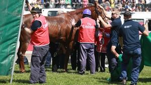 Red Cadeaux emerges from behind the screens at Flemington after having been pulled up in the Melbourne Cup