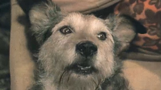Sully Singing Dog (1975)