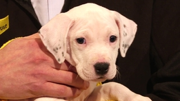 The Ray D'Arcy Show Extras: The Puppy Promise