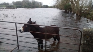 A donkey in Tuam, Co Galway (Pic: Joe Dempsey)