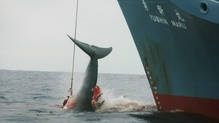 A Japanese vessel hunts a whale in the Southern Ocean in 2006