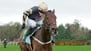 Mullins considering Tennessee trip for hurdle pair