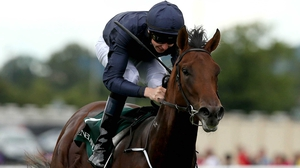 Air Force Blue with Joseph O'Brien up