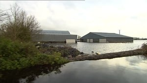 A fodder replacement scheme will see farmers paid at the market rate for fodder destroyed by flooding