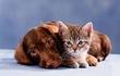Annual Pet Names Survey