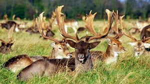 The wild fallow deer in the Phoenix Park are now associating humans with food (pic: Marie McGowan)