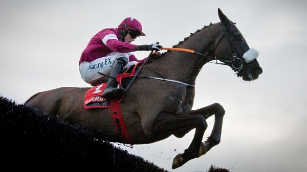 Don Cossack is the Gold Cup favourite