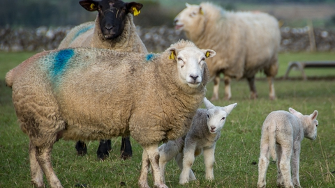 Brexit - Serious Threat to Irish Farmers