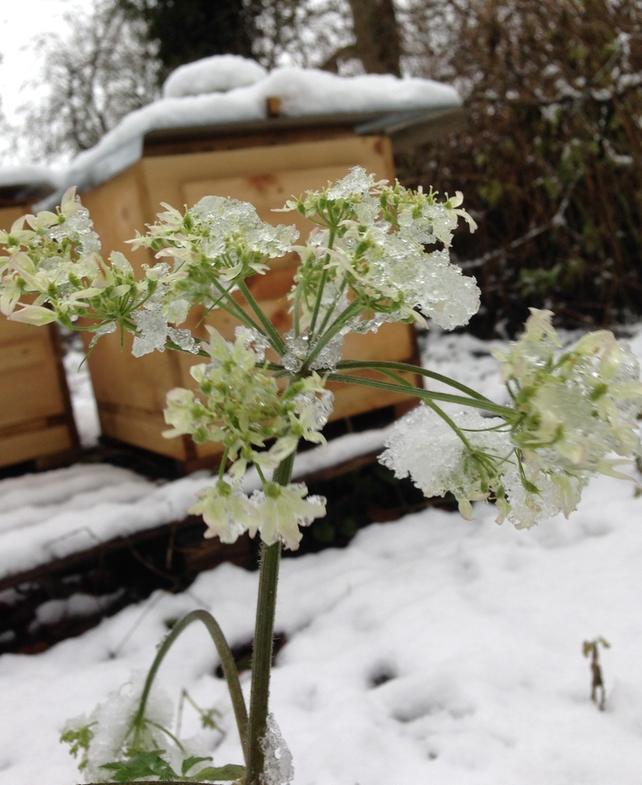 Snow obstacle too big at Brookfield Farm