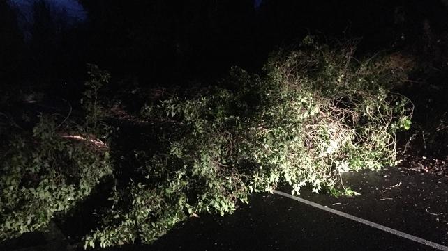 A fallen tree this morning blocked the Enniskerry to Kiltiernan road