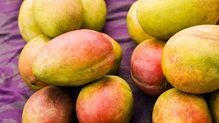 Choosing firm, ripe mangoes is key