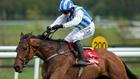 Killultagh Vic ruled out Cheltenham Festival