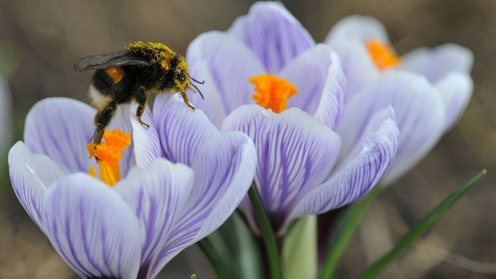 Ireland's bee species threatened with extinction