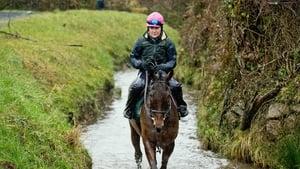 Un De Sceaux on the gallops at Willie Mullins' base