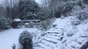 Snow in a Sandyford garden (Pic: Eamon Cleary)