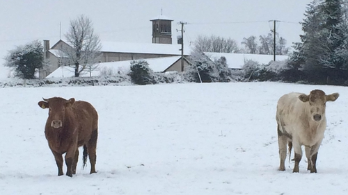 Snow problem being out and about in Kilteely, Co Limerick for this pair (Pic: James Spencer)