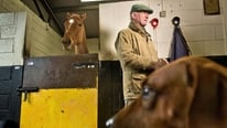 Trainer Willie Mullins is set for Cheltenham