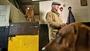 VIDEO: Mullins set for Cheltenham