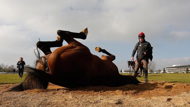 Vroum Vroum Mag enjoys a roll at Cheltenham racecourse