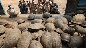 Officials found 102 elongated tortoises