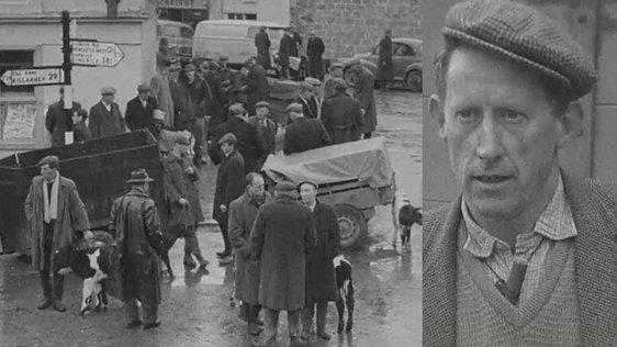 Cattle Market in Abbeyfeale, Limerick (1966)